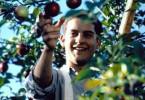 Apfel pflücken macht wirklich Spaß! Tobey Maguire
