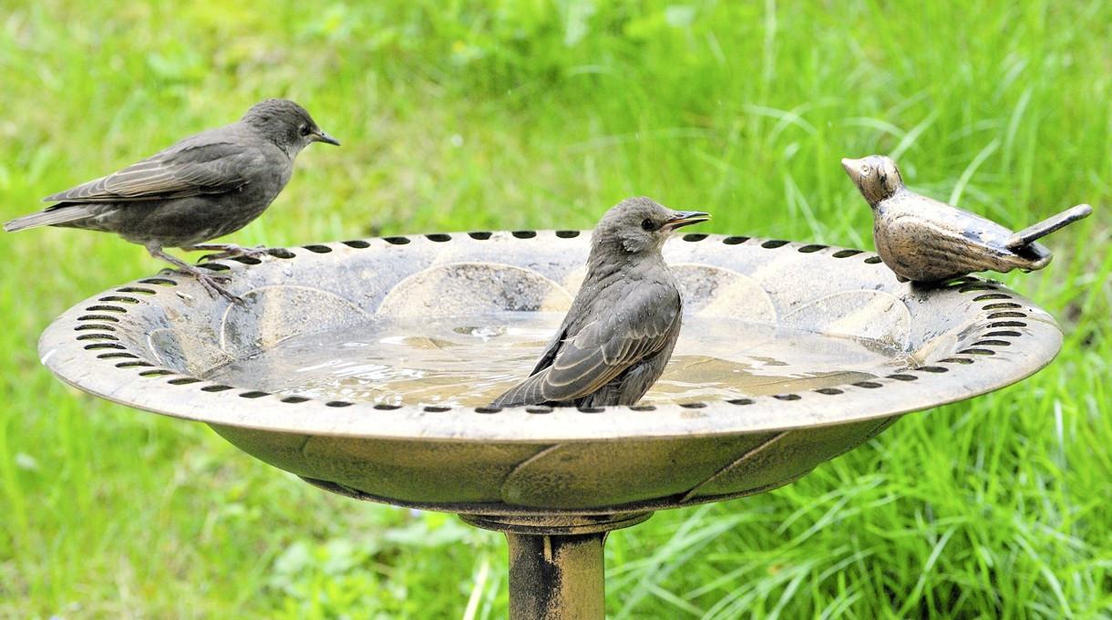 Worauf bei Vogeltränken zu achten ist - Gut zu Wissen