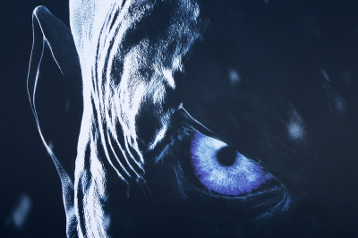 Game of Thrones - Staffel 8, Schauspieler und News zu GoT