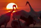 """""""Unsere Erde 2"""" dokumentiert einen Tag auf dem Planeten Erde, von Sonnenaufgang bis tief in die Nacht."""