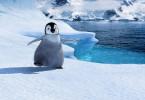 Der kleine Kaiserpinguien Mumble kann nicht singen. Er kann aber steppen und gilt dadurch bei den anderen Pinguinen als Außenseiter