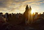 Über eine Million Kehlstreifpinguine leben auf der entlegenen Zavodovski Island im großen Südpolarmeer. Es ist die größte Pinguinkolonie der Welt.