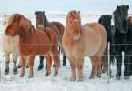 Wissenschaftler haben festgestellt, dass Pferde nicht nur menschliche Emotionen spüren können, sie können auch unseren Gesichtsausdruck deuten.