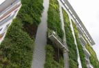 Begrünte Hausfassaden filtern Schadstoffe aus der Luft und wirken kühlend.