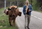 Fatah (Fatsah Bouyahmed) ist mit seiner Kuh Jacqueline unterwegs. Sie ist sein ganzer Stolz.