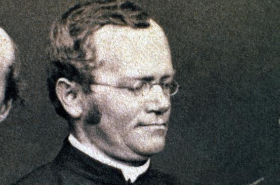 Ein österreichischer Mönch, Gregor Mendel, entdeckte die Grundlagen der Vererbung durch das Kreuzen tausender Erbsenpflanzen.